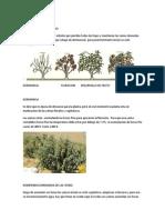 Cultivo Del Melocoton Huayco Rojo