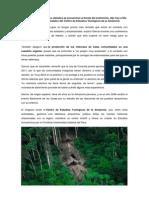 Los Pueblos Amazónicos Aislados Se Encuentran Al Borde Del Exterminio