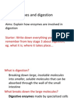 Enzymes and Digestion 2