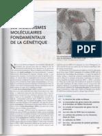 les mécanismes moleculaires fondamentaux de la génétique