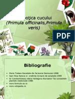 Prezentare Botanica