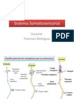 Somatosensorial y Dolor Modulo 2 Semana 24-28 Marzo
