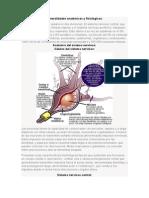 Generalidades Anatómicas y Fisiológicas