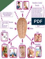 Diptico Cerebro