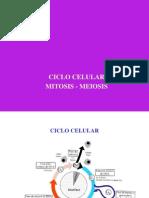 Ciclo Celular (2)