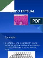 Renovación, Migración y Diferenciación de Las Células - Histologìa