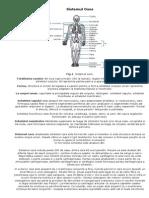 1 Sistemul Osos Descriere