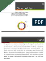 Plenaria Ciclo Celular