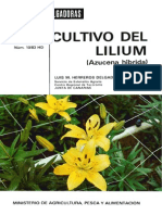Cultivo Do Lilium