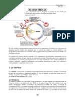 Apuntes -El Ciclo Celular