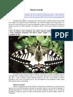 Fluturi si molii