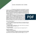 30-Classificazione Schematica Dei Cordat2i