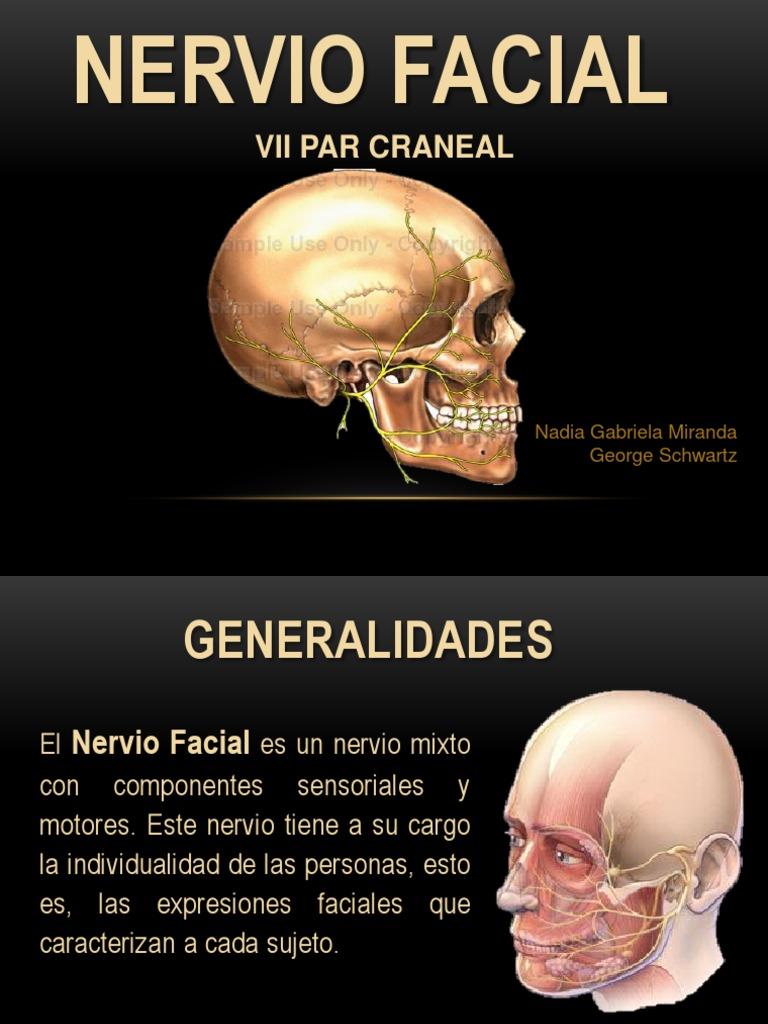 Nervio Facial (Vii Pc)
