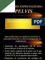 Pelvis Canal Del Parto