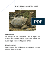 Tortuga de las Galapagos - Chile Miguel y Yoshiki