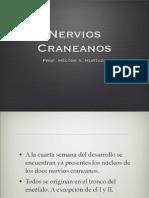(12) Nervios Craneanos