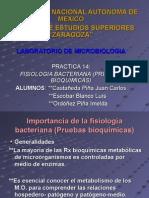 fisiologia_bacteriana_ (pruebas_bioquimicas)