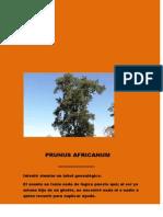 Prunus Africanum