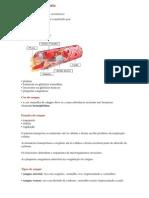 RESUMO DO Sistema Circulatório
