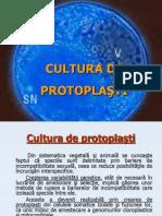 Cultura de Protoplasti