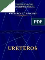 Ureteros y Tendones
