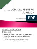Miologia Del Miembro Superior