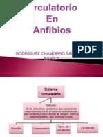 Circulación en Anfibios