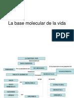 Bioquimica Info
