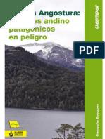 informe-bosque-patagonico