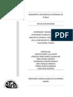 DIVERSIDAD Y ABUNDANCIA DE VISITADORES FLORALES EN IPOMOEA BRACTEATA (FAMILIA