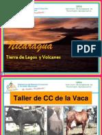 CC de VACA Modificada