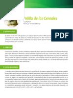 polilla_cereales