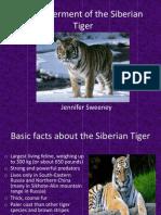 Endangerment of the Siberian Tiger