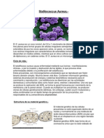 Stafilococcus Aureus