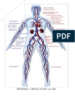 Www.referat.ro-referat La Biologie - Sistemul Circulator La 78