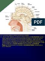 oxitocinapresentacion1