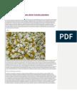 12 Metode de a Cunoaste Direct Tainele Plantelor