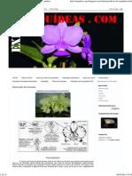 Reprodução de Orquídeas