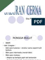 SALuran CERNA ppt materi