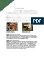 Knjiga - Pitanja i Odgovori Iz Carstva Gljiva