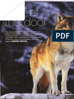 Wolves - piece in BASC magazine by Swedish Association for Hunting and Wildlife Management