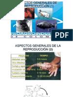 Aspectos Generales de La Reproducción (1)