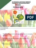 Fotosintesis - CEPU 2010 I