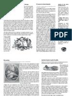 perriodico.pdf