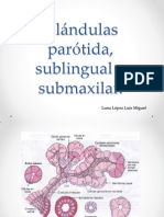 Glándulas Parótida, Sublingual y Submaxilar