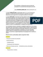 Maduracion Pulmonar Betametasona