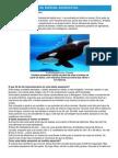Orcas - Ficha do Animal - Como funcionam as baleias assassinas