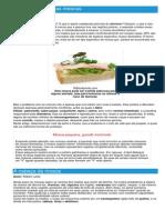 Moscas - Ficha do Inseto - Como funcionam as moscas