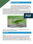 Formigas - Ficha  da Formicidae - Como funcionam as formigas