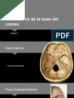Cara Interna de La Base Del Cráneo